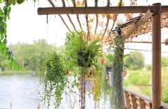 Flower hanging plant in pot decoration at home garden royalty free stock photography