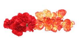 Flower head of carnation Stock Photos