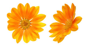Flower head of orange gazania Royalty Free Stock Photos