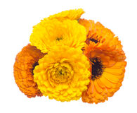 Flower head of pot marigold Stock Image