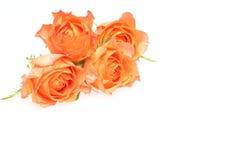 Flower head of roses Stock Photo