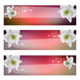 Flower header with blossom orchid Royalty Free Stock Photography