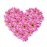 Flower heart Stock Images