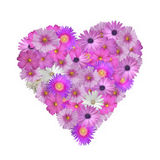 Flower Heart. Pretty pink flowers in the shape of a heart isolated on white Royalty Free Stock Photography