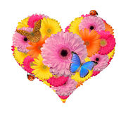Flower heart with butterfly Stock Image
