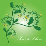 Flower heart card with green background Stock Photo