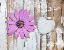 Flower and heart Stock Photos