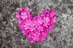 Flower heart on the floor. Magenta flower heart on the floor Royalty Free Stock Photo