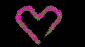 Flower Heart stock footage