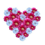 Flower heart made of cutout peony and corn flowers. On white background Stock Images