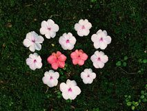Flower heart on moss Stock Photos