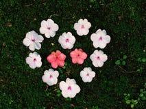 Flower heart on moss Stock Photos