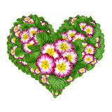 Flower heart from Primrose. Flower heart isolated on white background Royalty Free Stock Photos