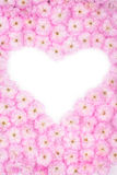 Flower heart_3 Stock Photography