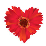 Flower heart shaped Royalty Free Stock Photos