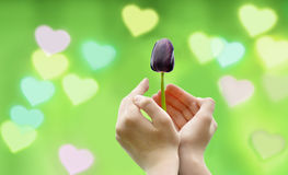 Flower and Hearts background. Stock Photography