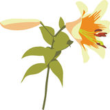 Flower heartsease 02. Flower heartsease in color 02 stock illustration