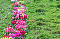 Flower Hedge in Grass Lawn Stock Photo