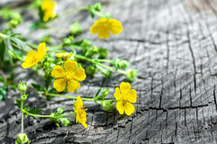 Flower herb  the wooden Royalty Free Stock Images