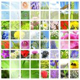 Flower and herbal collage. Flower and herbal with little insect collage stock photos