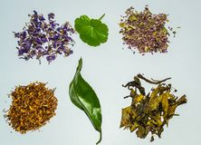 Flower and herbal tea collection. Herbal tea on white background health procurement tea Royalty Free Stock Photos