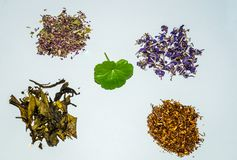 Flower and herbal tea collection. Herbal tea on white background health procurement tea Royalty Free Stock Photography