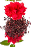 Flower and hibiscus tea Stock Photography