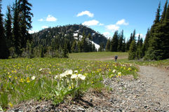 Flower hike. Hiking amongst wildflowers at Manning provincial park,bc, canada Stock Image