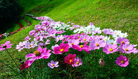 Flower in the hill. Flower in the green hill Stock Image