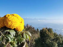 Flower in the Himalaya Royalty Free Stock Photo