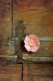 Flower and hinge Stock Image