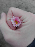 Flower in hold hand Stock Photos