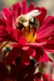 Flower, Honey Bee, Bee, Nectar stock photo