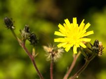 Flower, Honey Bee, Yellow, Flora stock photos
