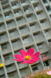 Flower and house Royalty Free Stock Image