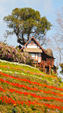 Flower house. House in the flower garden Royalty Free Stock Images