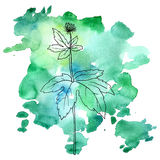 Flower of hydrastis at watercolor background. Vector flower of hydrastis at watercolor background, hand drawn medical herb, line drawing plant, isolated floral Stock Image