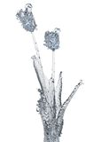 Flower of ice Stock Photography