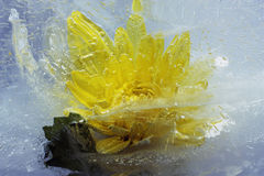 Flower Ice Royalty Free Stock Images