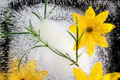 Flower in ice stock image