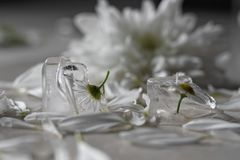 Flower in ice Cube Stock Photos
