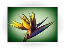 Flower Icon Stock Images