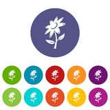 Flower icons set vector color. Flower icons color set vector for any web design on white background Stock Photography