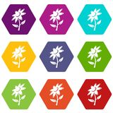 Flower icons set 9 vector. Flower icons 9 set coloful isolated on white for web Vector Illustration