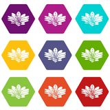 Flower icons set 9 vector. Flower icons 9 set coloful isolated on white for web Stock Illustration