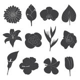 Flower Icons Set. 12 Design of flowers in black isolated on white background Royalty Free Illustration