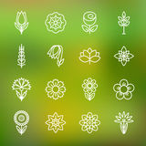 Flower icons set. Modern Thin Contour Line. Royalty Free Stock Image