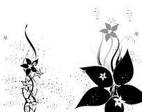 flower illustration Stock Images