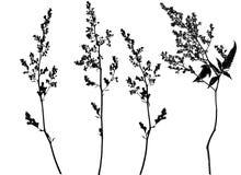 Flower illustration Royalty Free Stock Image