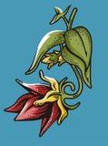 Flower illustration series Royalty Free Stock Photo